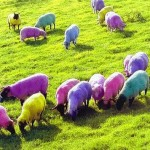 Image from: http://8bitnerds.com/colorful-wooly-dyed-sheep/