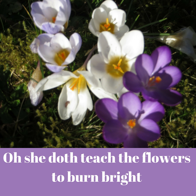Oh she doth teach the flowers to burn bright (1)
