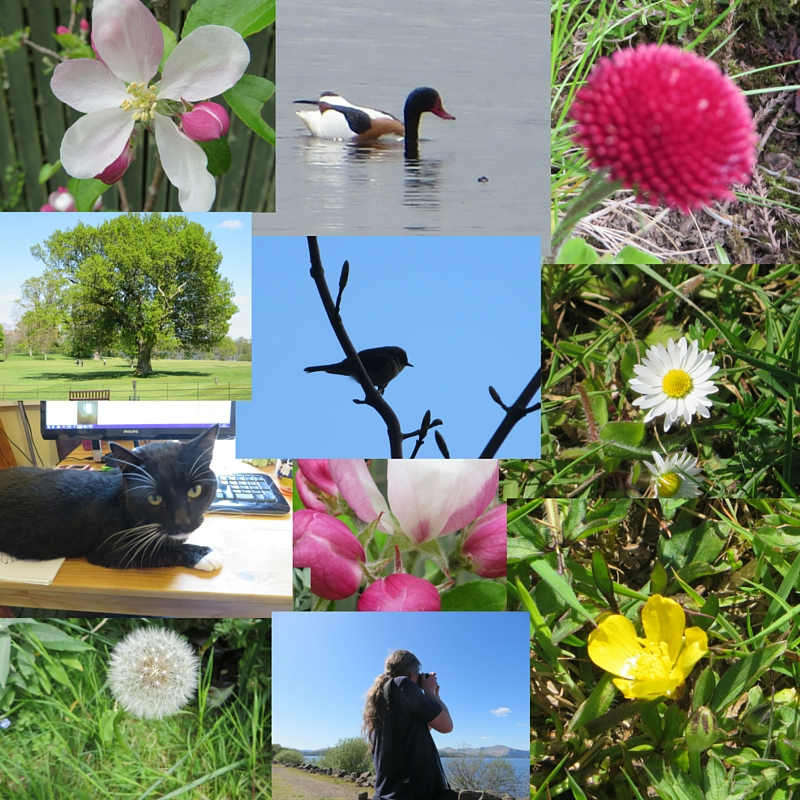 Photo collage of flowers and birds