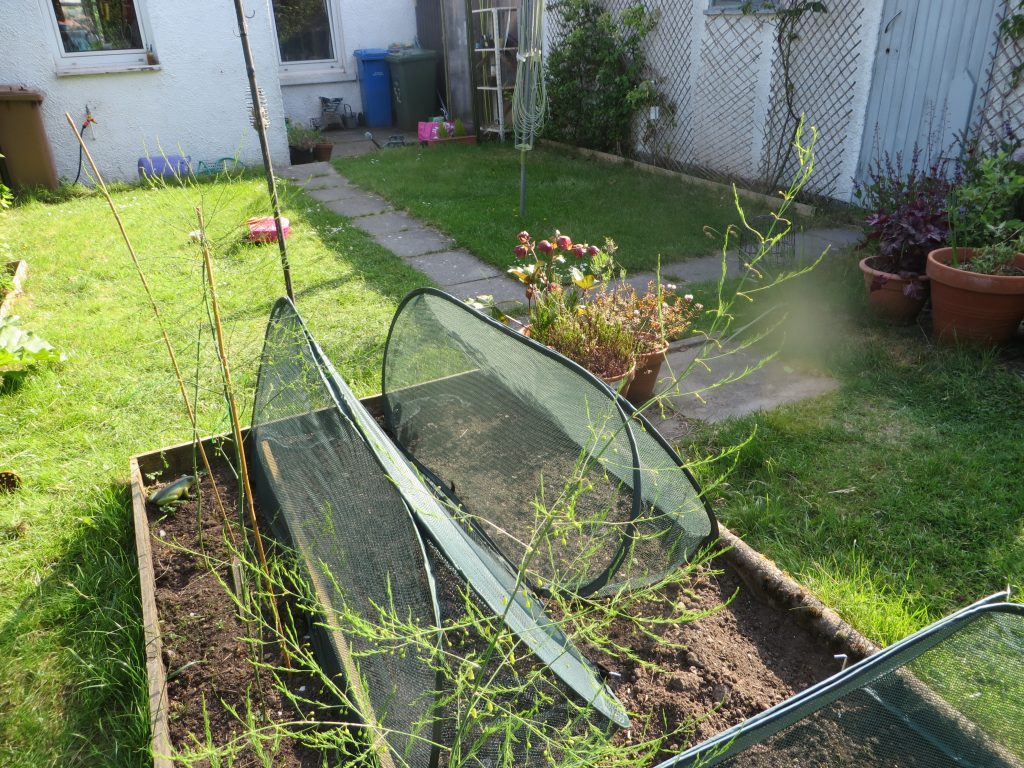 net covers over a veg patch