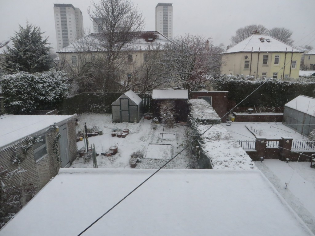 A snowy garden and houses