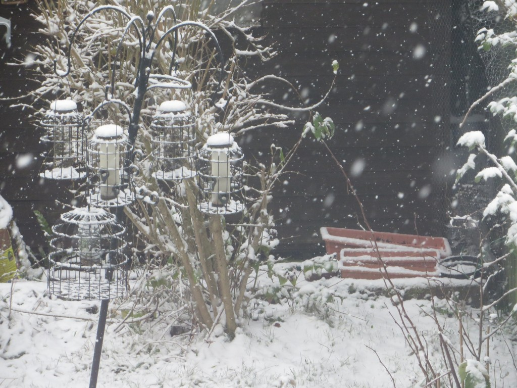 Snow on bird feeders
