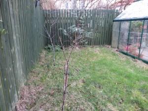 Tiny apple tree