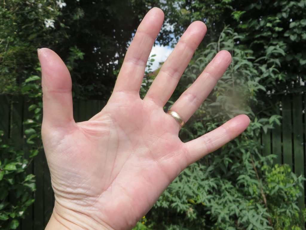 palm of hand against trees